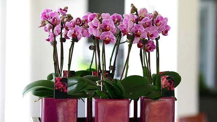 Orkide Bakımının Püf Noktaları